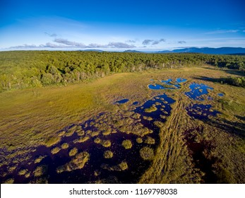 Aerial view at swamp near forest border