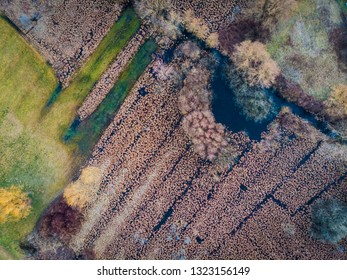 Aerial view of swamps