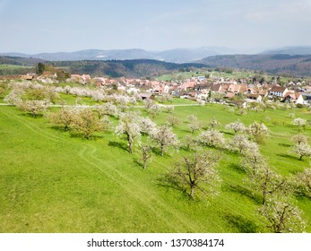 Aerial view of the Swiss village Nuglar with blooming orchard garden over the hill