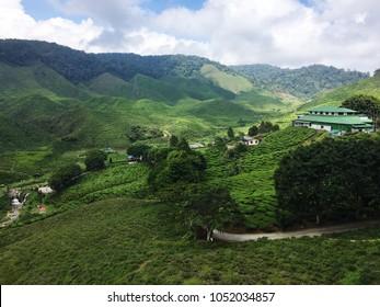 Aerial view of tea plantation at Tanah Rata, Cameron Highlands, Malaysia.