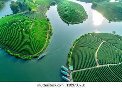 Aerial view of tea Thanh Chuong tea hill, Nghe An, Vietnam.