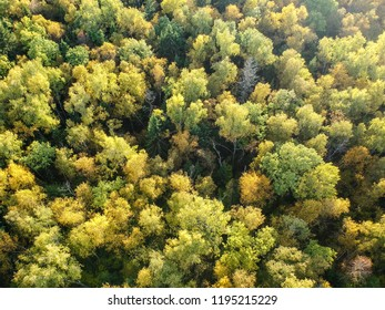 Aerial view of thick forest in autumn with colorful trees