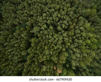 Aerial view top view of green trees forrest in germany