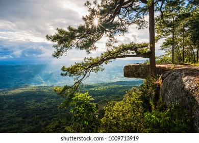 Aerial view from the top of mountain with cliff and pine tree on sunset in Phu Kradueng National Park, Loei Province, Thailand