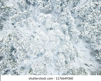 Aerial view or top view of winter forest, pine tree with snow covered. Winter background
