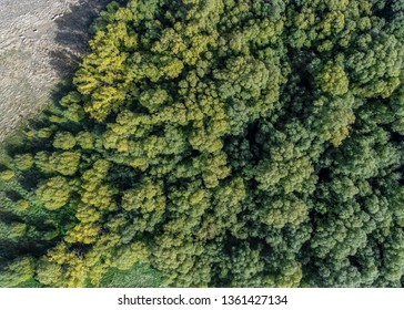 Aerial view of tops of trees in New Zealand.