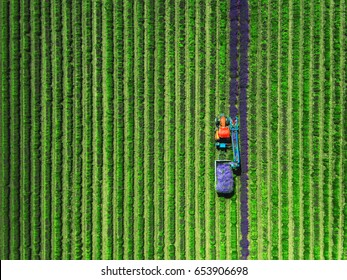 Aerial view of Tractor harvesting field of lavender.