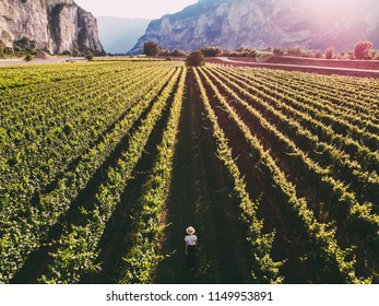 Aerial view of traveler woman in hat stands on large vineyard plantation under beautiful sunset light. Agri tourism tour of Tuscany. Female farmer examines her vineyard site. Wine production region