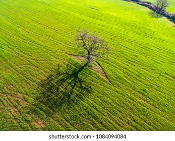 Aerial view of a tree in a plowed field in Italy.