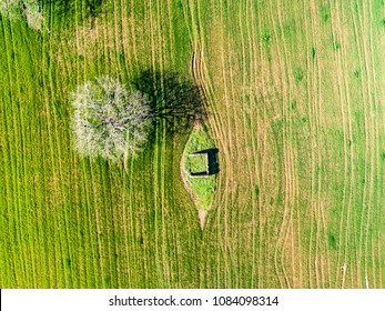 Aerial view of a tree in a plowed field in Italy