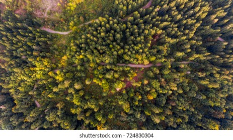 Aerial view of tree tops.