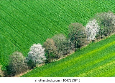 aerial view of trees in flower near Flers in the department of Orne in France