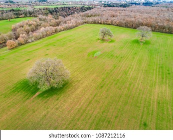 Aerial view of trees on a plowed field in Italy.