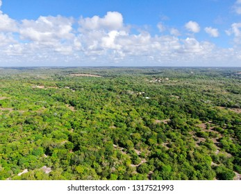 Aerial view of tropical forest, jungle in Praia Do Forte, Brazil.  Detailed aerial view of a forest supporting lush ferns and palms trees. mountain ranges and hills covered by evergreen forest.