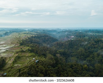 Aerial view of tropical rainforest.