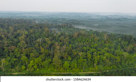 An aerial view of tropical rainforest in the morning misty