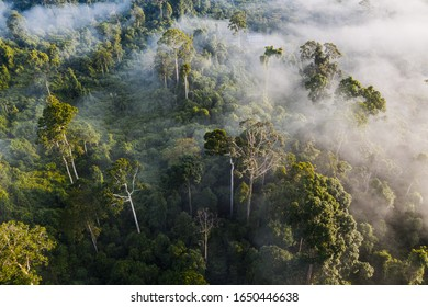 An aerial view of tropical rainforest in morning, Stunning view of Borneo Rainforest with misty in Rainforest Discovery Centre (RDC), Sabah.