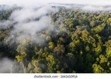 An aerial view of tropical rainforest in morning, Stunning view of Borneo Rainforest with misty