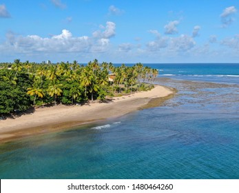Aerial view of tropical white sand beach, palm trees  and turquoise clear sea water in Praia do Forte, Bahia, Brazil. Travel tropical destination in Brazil