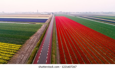 Aerial view upon field with flowers