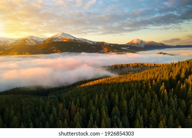 Aerial view of vibrant sunrise over Carpathian mountain hills covered with evergreen spruce forest in autumn.