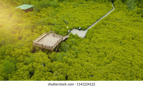 Aerial view, Viewpoint of Mangroves in Tung Prong Thong or Golden Mangrove Field at Estuary Pra Sae, Rayong, Thailand