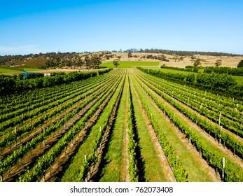 An aerial view of a vineyard