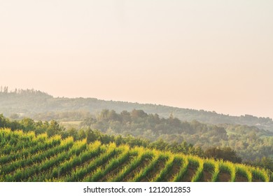 Aerial view of vineyard in early morning  with forest in background