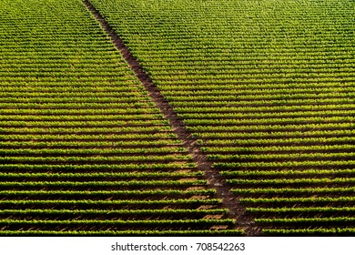 Aerial view of a vineyard hill with road at sunset