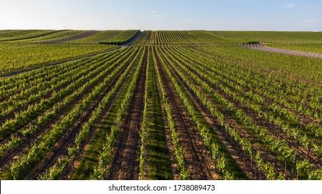 Aerial view of a vineyard in summer