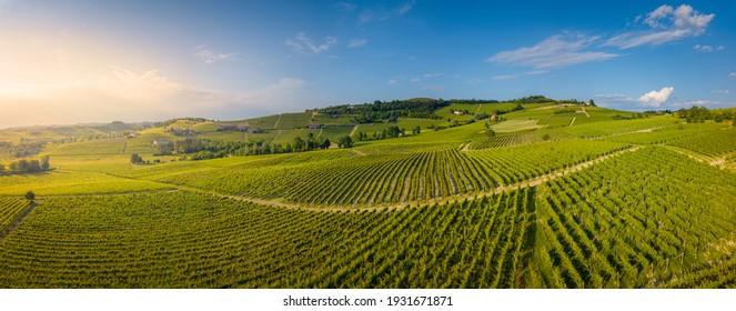 Aerial view of vineyards in Langhe, Piedmont, Italy