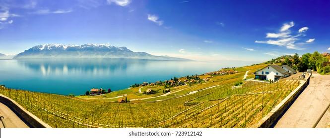 Aerial View of The Vineyards in the Lavaux Region of Switzerland, Lake Geneva, Panoramic View