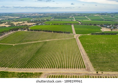 Aerial view of vineyards at McLaren Vale in Australia