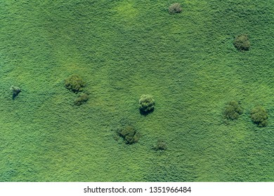 Aerial view of a wallpaper green swamp in a nature reserve area in The Netherlands. It is located in lake Oostvaardersplassen between Almere and Lelystad. An abstract view of grass and trees.