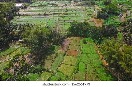 Aerial view of watercress fields at Le val nature park located in the south-east of Mauritius island