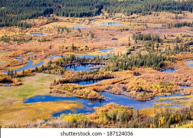 Aerial view of wet marshland in autumn fall colored boreal forest taiga of Yukon Territory, Canada