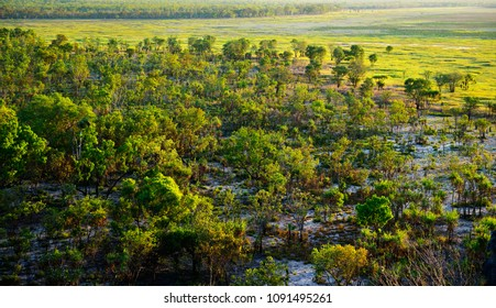Aerial view at wetland with trees illuminated by beautiful sunset light. Australian Kakadu park.