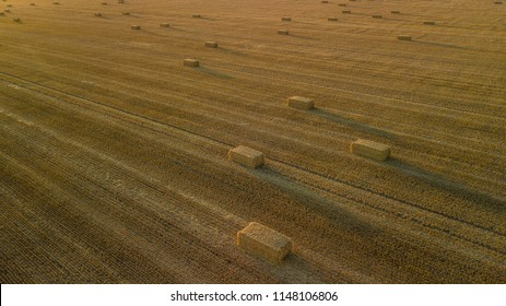 Aerial view of a wheat field in England