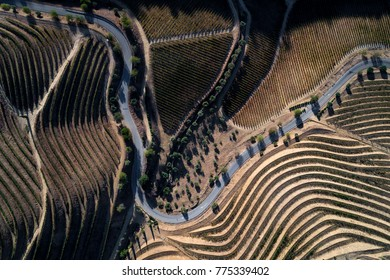 Aerial view of a winding road along the vineyards in the hills of the douro valley; Concept for travel in Portugal and in the Douro Valley