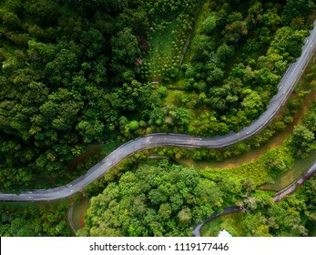 Aerial view of winding road in the forest