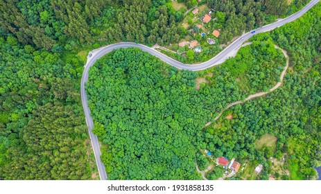 Aerial view of winding road trough the dense woods.