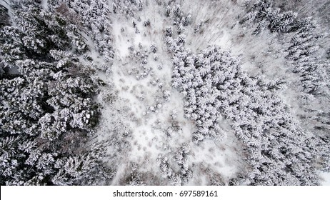 aerial view of winter forest covered in snow. drone photography - panoramic image