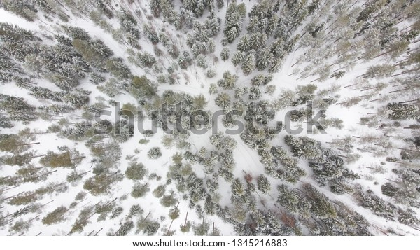 Aerial view to winter forest in Finland, Europe