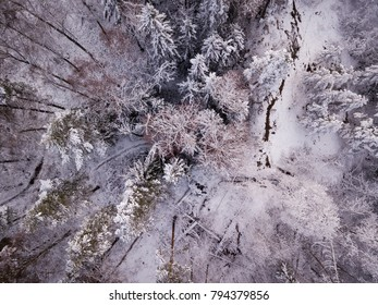 Aerial view of winter forest in Southern Finland with snow-covered trees