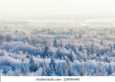 Aerial view of a winter woods Snowy tree branch in a view of the winter forest