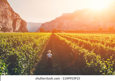 Aerial view of woman in hat stands on large vineyard plantation under beautiful sunset light. Agri tourism tour of Tuscany. Female tourist enjoy travel visiting vineyard site. Wine production region