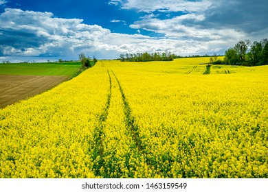 Aerial view of yellow rape fields in spring, Poland