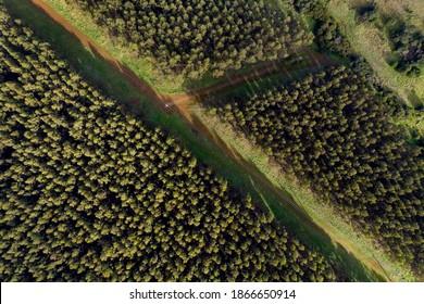 Aerial viewpoint over a pine plantation, Australia