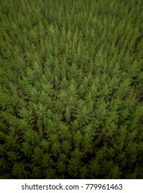 Aerial views of New Zealand trees