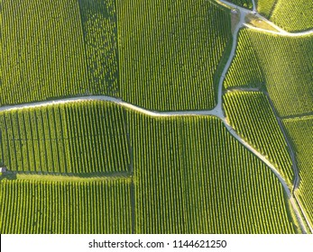 Aerial of Vineyard fields between Lausanne and Geneva in Switzerland